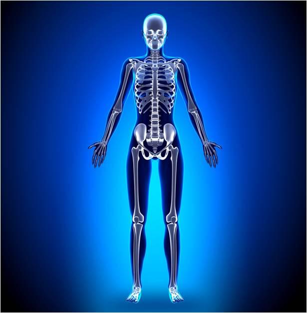 Kanceri i kockave në trupin human